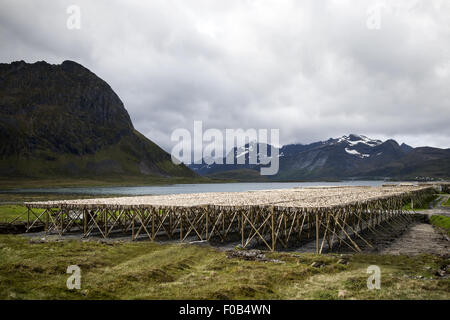 Cod fish drying on wooden racks, Lofoten Islands, Norway, Scandinavia, Europe. - Stock Photo