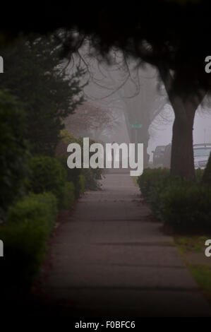 Early morning in fog with sidewalk and green shrubs and trees with person excersing by running or walking in their - Stock Photo