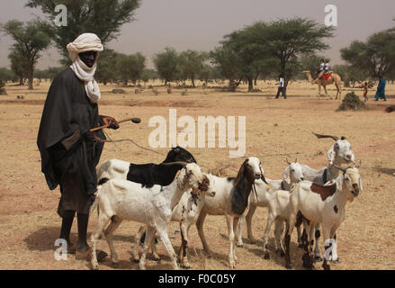 BANDIAGARA, MALI - SEPTEMBER 30, 2008:  Unidentified african shepherd with his sheeps in bandiagara in the Mopti - Stock Photo