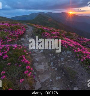 Beautiful Carpathian mountains in spring time. Chornohora range, Ukraine, Europe. - Stock Photo
