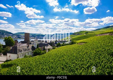Green fresh vineyard near Ruedesheim in Rheinland-Pfalz, Germany. - Stock Photo