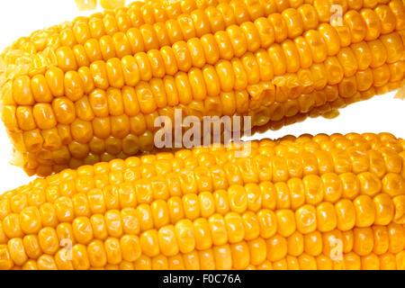 Maiskolben/ maize/ corn cob - Symbolbild Nahrungsmittel. - Stock Photo