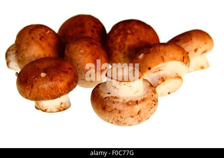 Plize: Champignons - Symbolbild Nahrungsmittel. - Stock Photo