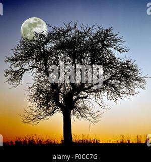 Vollmond, Landschaft, Baum, fotomontage - Stock Photo