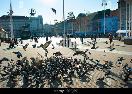 Flock of pigeon at Ban Jelacic Square, the central square of  Zagreb. - Stock Photo