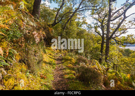 An autumnal woodland track near Salen on the shores of Loch Sunart, Ardnamurchan, Scotland - Stock Photo