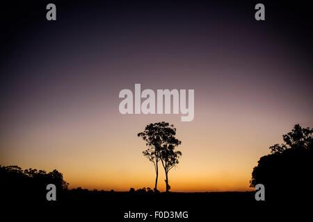 Silhouette of an eucalyptus tree seen at sunset in Australia. - Stock Photo
