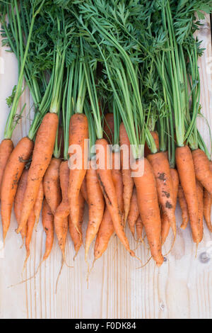 Daucus carota. Freshly dug organic carrots - Stock Photo