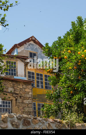 oranges on a tree outside a house in historic town centre of Viseu, Portugal - Stock Photo