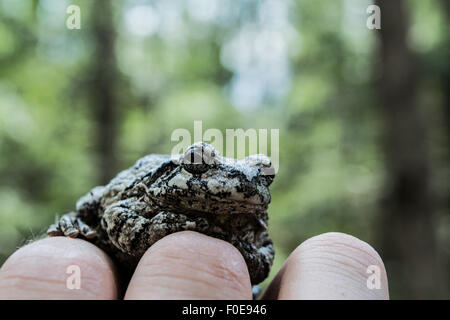 Toad in the forest - Stock Photo