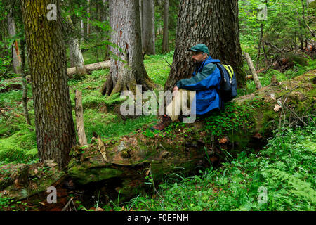 Guide and ornithologist, Vladimir Arkhipov, sitting on a fallen Nordmann fir (Abies nordmanniana) tree, old-growth - Stock Photo