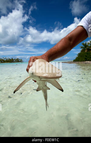 BLACKTIP REEF SHARK OUT OF WATER ON A BEACH - Stock Photo