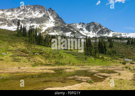 Alpine pond and meadow and peak of Blackcomb Mountain seen from the Overlord Trail, Blackcomb Mountain, Whistler, - Stock Photo