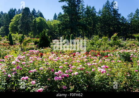 Portland\'s International Rose Test Garden in Washington Park ...