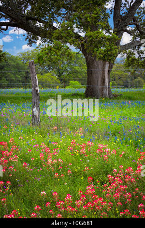 The Texas Hill Country is a twenty-five county region of Central Texas and South Texas - Stock Photo