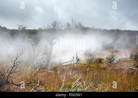 Natural steam rising from volcanic steam vents in the earth at Volcano National Park, Kilauea Hawaii. - Stock Photo