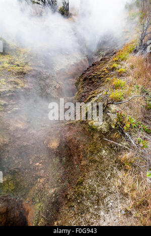 Natural steam rising from volcanic steam vents in the earth at Volcano National Park, Kilauea Hawaii.S - Stock Photo