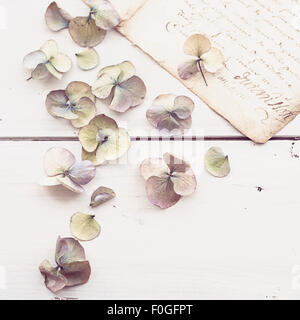 closeup of faded hydrangea flowers with vintage letter in the background - Stock Photo