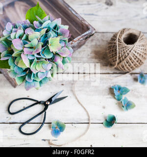 Blue-purple hydrangea in a basket on wooden table with twine and black scissors - Stock Photo
