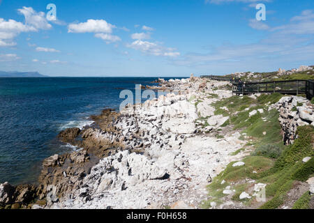 African penguin colony at Betty's Bay, South Africa - Stock Photo