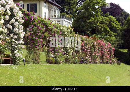 rosengarten beutig baden baden stock photo 86427368 alamy. Black Bedroom Furniture Sets. Home Design Ideas