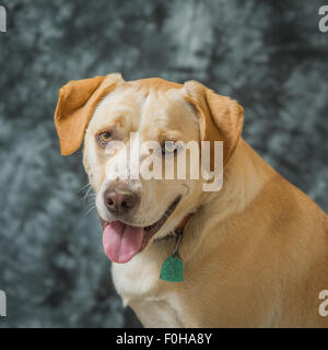 Yellow dog portrait - Stock Photo