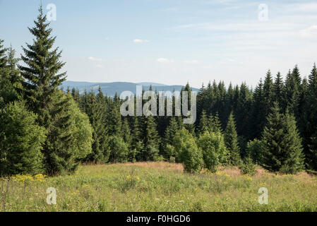Norway spruce-dominated highland forests are developing naturally in the National Parks Bavarian Forest and Sumava. - Stock Photo