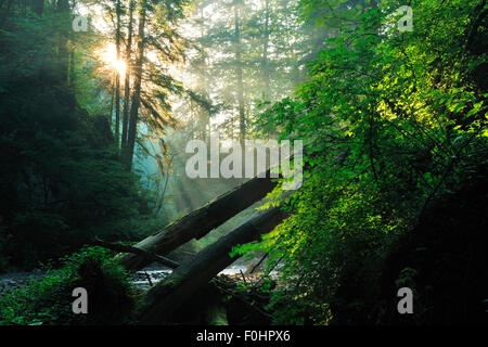 Rays of sunlight penetrating forest in Ghimbavul Valley Gorge, Arges County, Leota Mountains, Carpathian Mountains, - Stock Photo