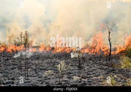 Stubble burning with controlled fires in a reserve in Cameroon - Stock Photo
