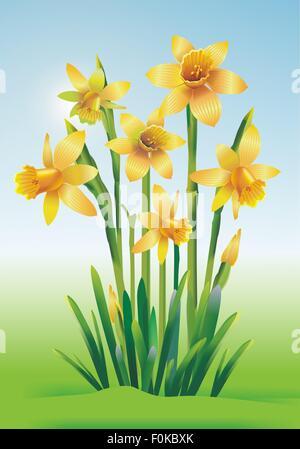 Jonquils Art Illustration. Yellow Jonquils Floral Theme. - Stock Photo