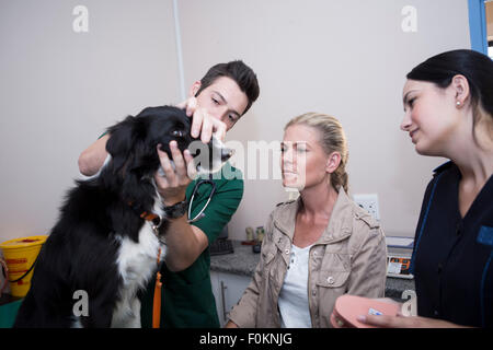 Woman at a veterinarian with Border Collie - Stock Photo