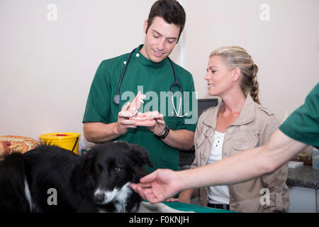 Woman with Border Collie at a veterinarian with teeth model - Stock Photo