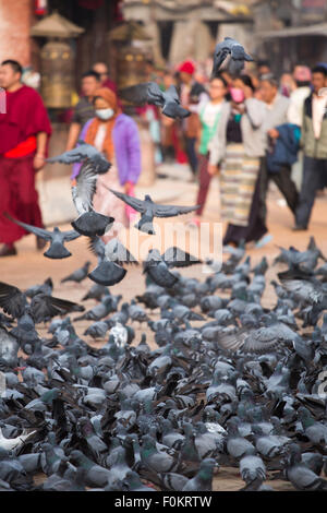 A group of pigeons early in the morning at the Boudhanath Stupa in Kathmandu, monks and prayers are walking in the - Stock Photo