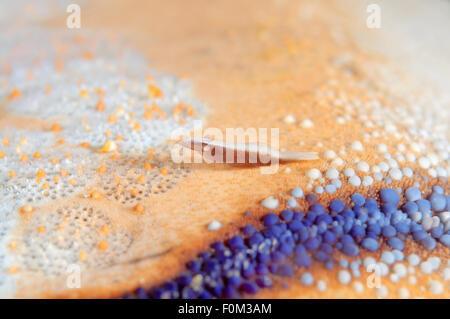 Bohol Sea, Philippines. 15th Oct, 2014. starfish shrimp (Periclimenes soror) Bohol Sea, Philippines, Southeast Asia - Stock Photo