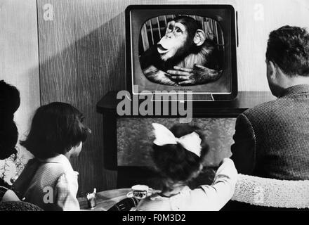 broadcast, television, family in front of a television set by Telefunken, 1950s, Additional-Rights-Clearences-NA - Stock Photo