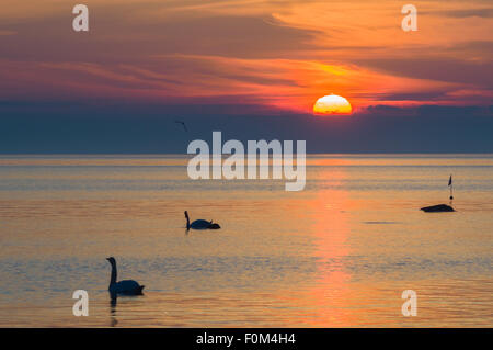 Two swans silhouettes in the beautiful sunset over the sea - Stock Photo