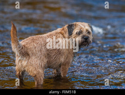 Dog Walks Otterburn