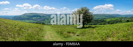 Hawthorn tree with white blossom on Sugar Loaf mountain near Abergavenny Wales UK - Stock Photo