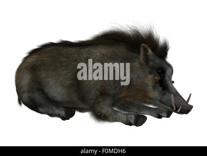3D digital render of a wild warthog resting isolated on white background - Stock Photo