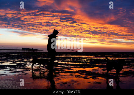 Southport, Merseyside, UK. 18th Aug, 2015. Dog walker near Southport Pier in Merseyside.  Not only does Southport - Stock Photo