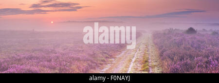A path through blooming heather in The Netherlands on a beautiful foggy morning at sunrise. - Stock Photo