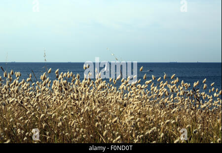 Coastal sea grasses in foreground with sailing ship and atlantic from Boulevard des Korrigans, Le Pouliguen, Loire - Stock Photo