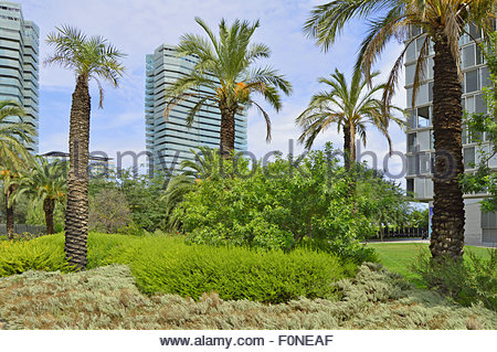 Palm trees Parc Diagonal Mar and modern properties in background, Sant Martí Barcelona Catalonia Spain Europe - Stock Photo