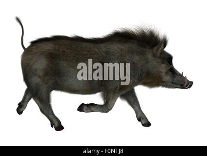3D digital render of a wild warthog running isolated on white background - Stock Photo