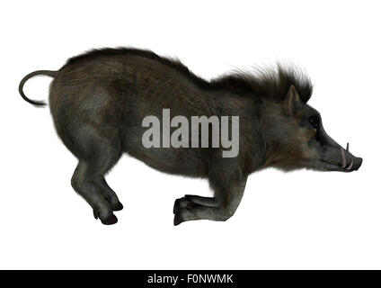 3D digital render of a wild warthog isolated on white background - Stock Photo