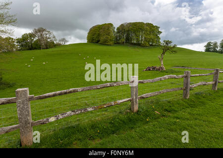 A rustic, old wooden fence around a field in Brecon, south Wales - Stock Photo