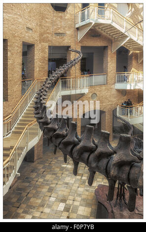A dinosaur;s tail snakes it way up a staircase at the Fernbank Museum of Natural History in Atalanta - Stock Photo