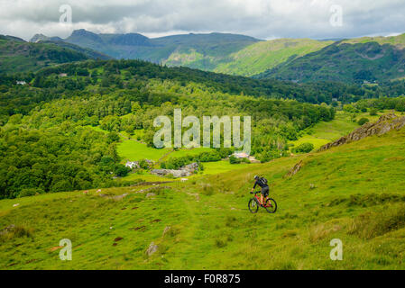 Female mountain biker descending towards Little Langdale in the Lake District with the Langdale Pikes on the skyline - Stock Photo