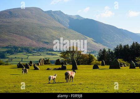 Sheep by Castlerigg stone circle, Lake District, with Blencathra (aka Saddleback) behind - Stock Photo