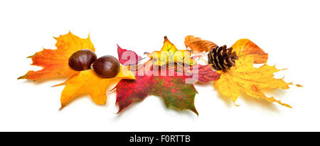 Arrangement of autumn leaves, chestnuts and a fir cone, studio isolated on white background - Stock Photo